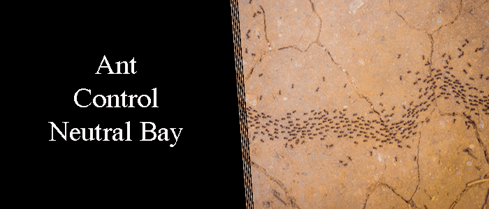Ant Control Neutral Bay