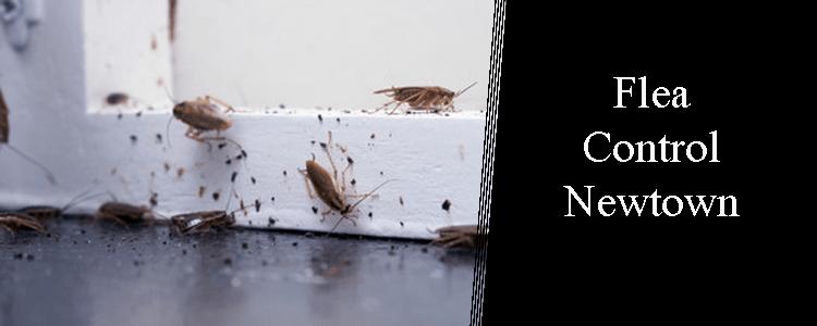 Cockroach Control Neutral Bay